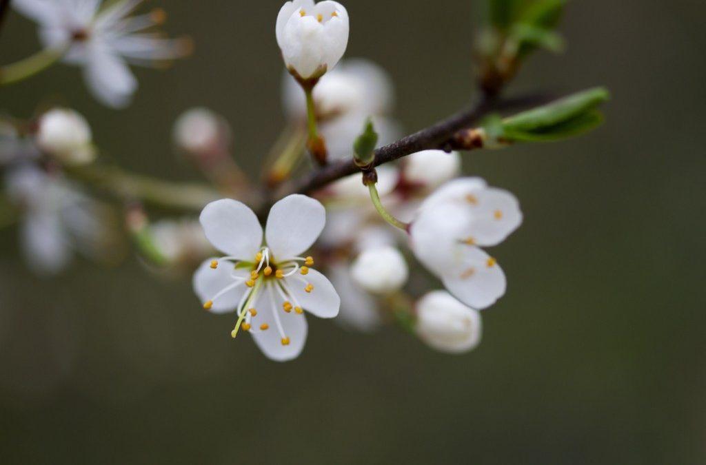 Le printemps est là…