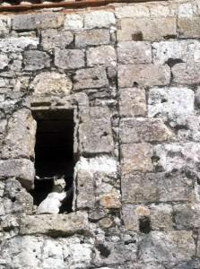 les chats en pierre de la Romieu