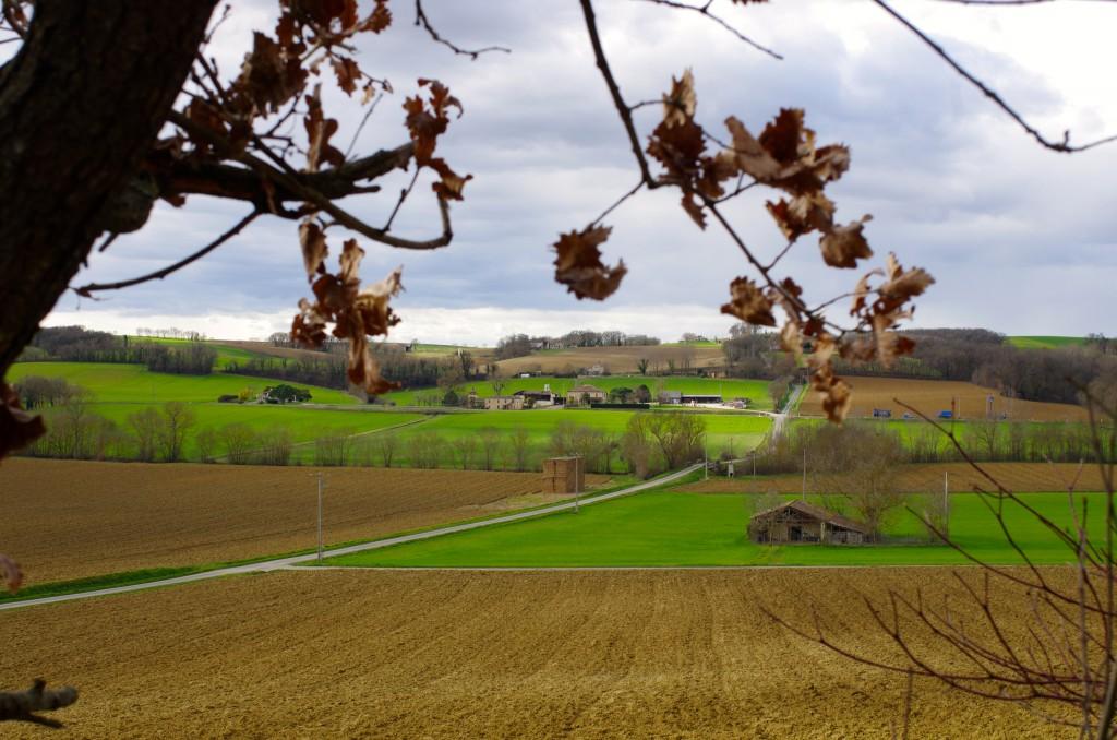 paysage, vue d'en bas du chemin