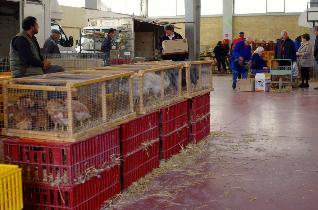Halle, vente de volailles et animaux vivants