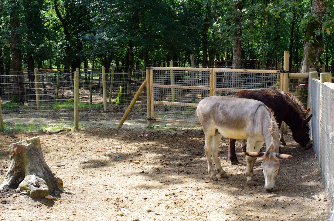 grand gite à 35 minute du parc ânes à animaparc