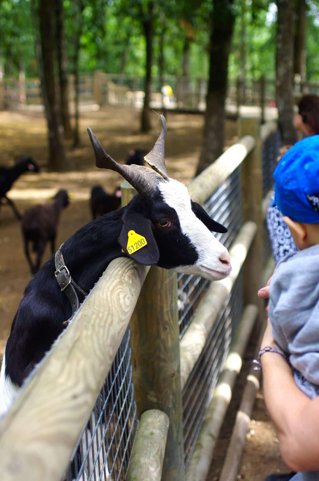 parc animalier chèvre proche du grand gîte de charme